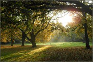 bomen mediteren