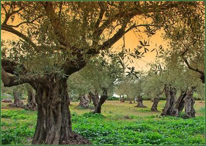 bomen verzorgen