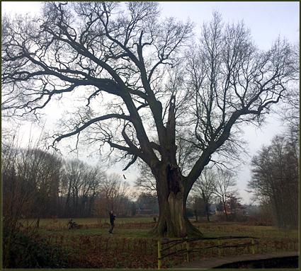 bomen en mensen