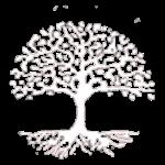 Lukaboom boomverzorging groeiplaatsanalyse